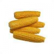 Fresh Corn Yellow 4 Ear PKG