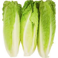 Lettuce Garden Hearts of Romaine Bunch 3CT PKG
