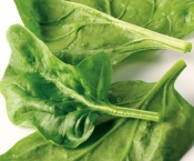 Store Brand Spinach 9oz Bag
