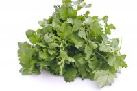 Cilantro 1 Bunch Fresh